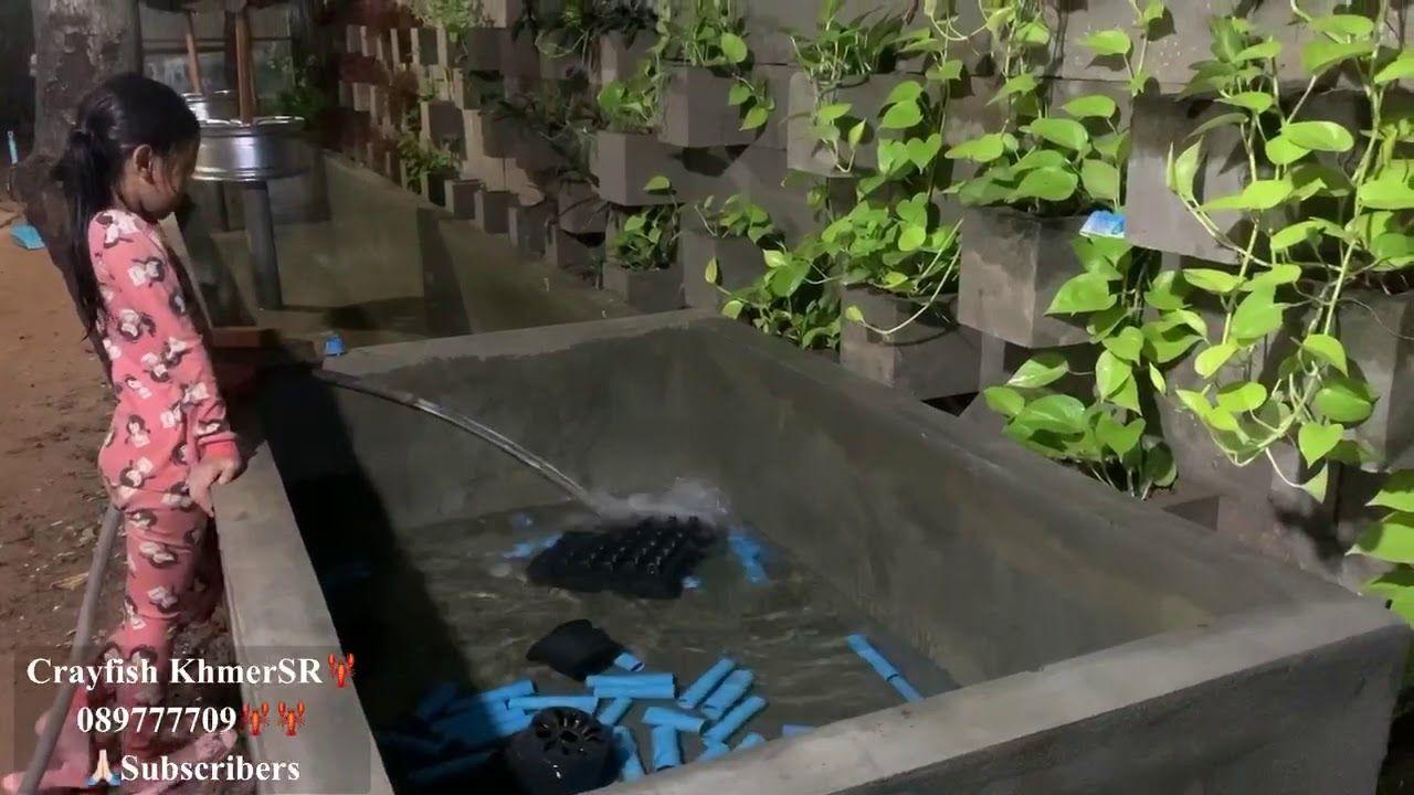 เตร ยมบ อก อนใส ล กก งก ามแดง 1เด อนคร ง Crayfish Khmersr 089777709