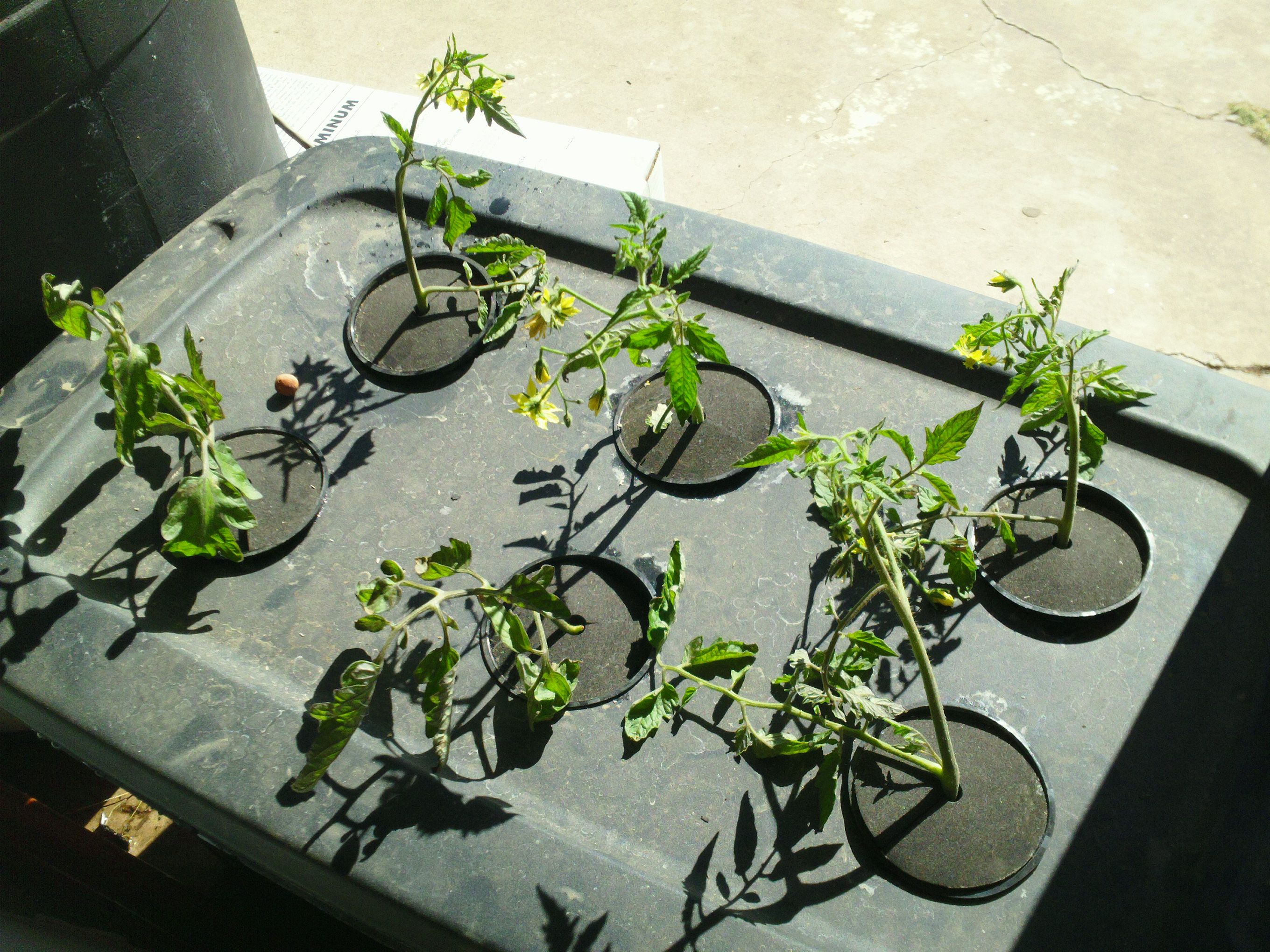 How To Make A Simple Aeroponics System Http Www 640 x 480