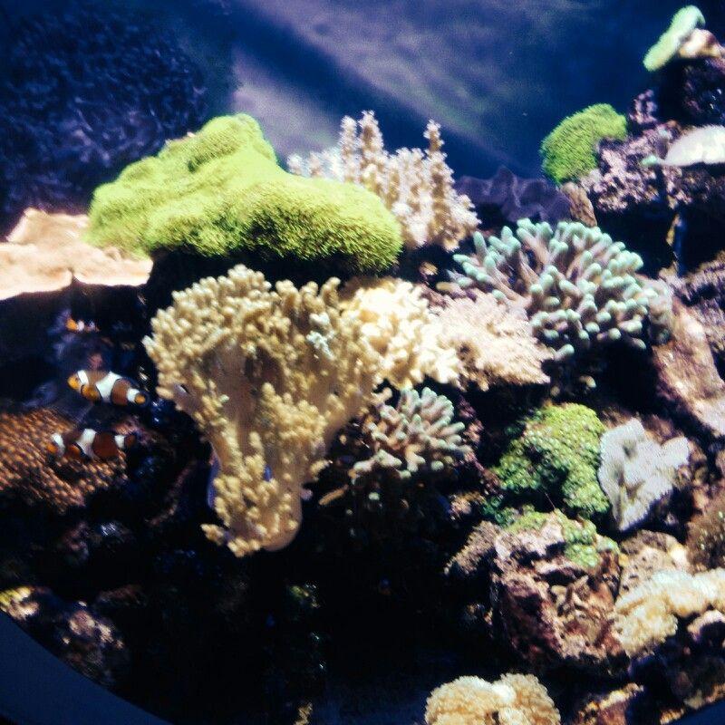 From the Oregon Coast Aquarium