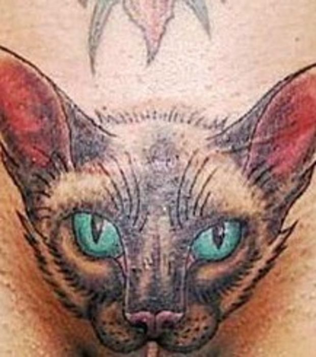 katzen tattoo im intimbereich einer frau megl togatand helyek pinterest katzen tattoo. Black Bedroom Furniture Sets. Home Design Ideas