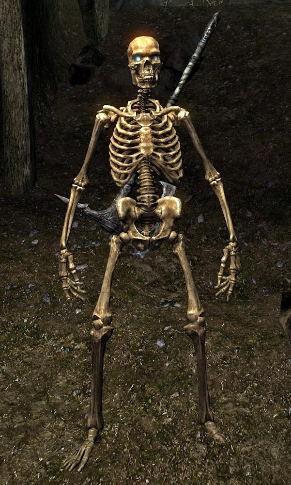 Skeleton (Skyrim) - Elder Scrolls - Wikia