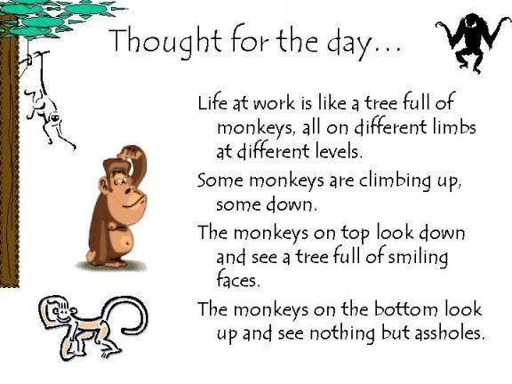 Thought Of The Day Work Quotes Funny Fun Quotes Funny Love