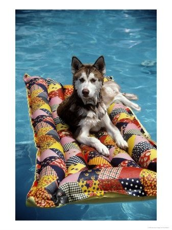 Relaxing In The Sun At Usa Vacation Homes In Orlando Fl Travel Pets On Vacation Pets On Vacation Dog Pool Floats Dog Pool Dogs