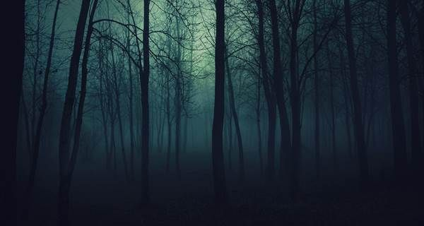 Midnight Darkness Bites Scary Backgrounds Dark Wood Background Forest Wallpaper Full hd horror background photos