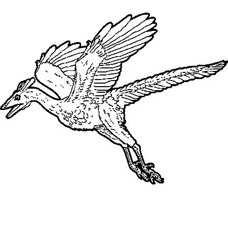 Dessin dinosaure volant a colorier dessin pinterest dinosaure volant dessin dinosaure et - Image dinosaure a colorier ...