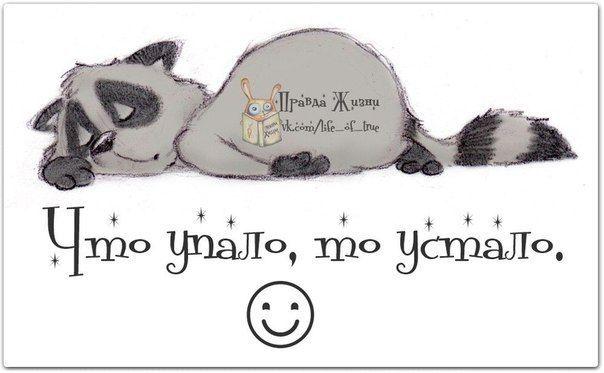 Позитивные фразочки в картинках №050514 Мотиваторы #мемы ...