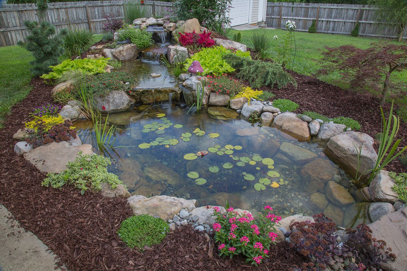 A customer 39 s tranquility pond built by living waterscapes for Fish pond supplies near me