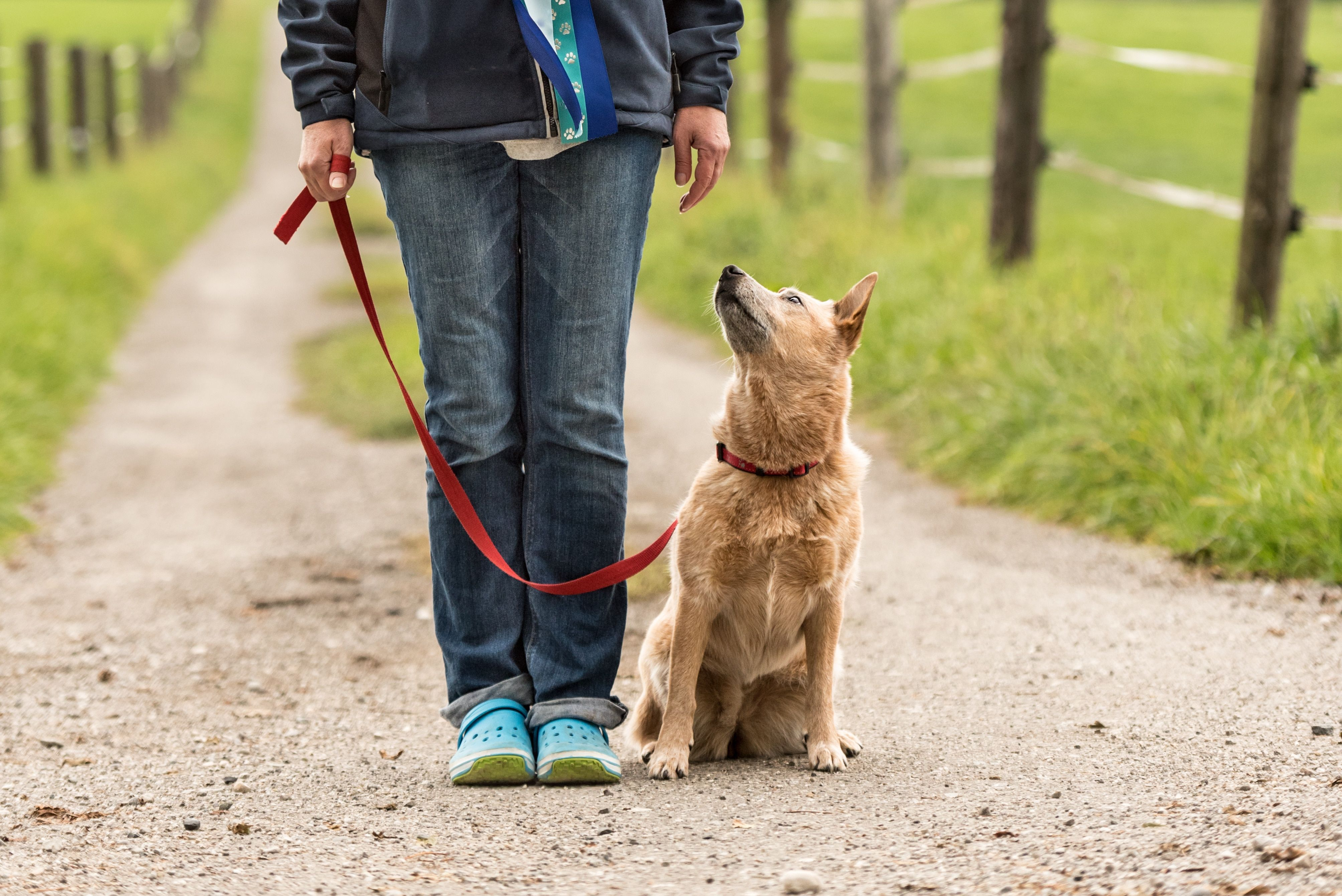 How To Train Your Dog To Walk Next To You Without A Leashhow To