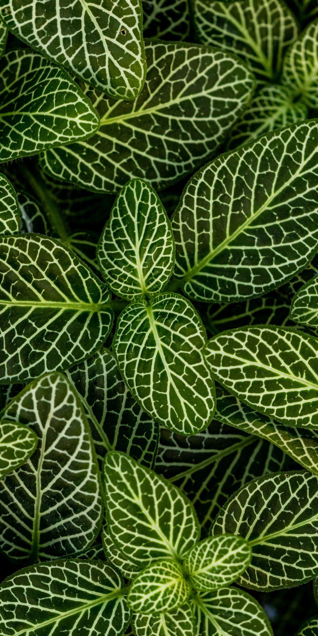 Plants Leaves Green Striped 1080x2160 Wallpaper Leaf