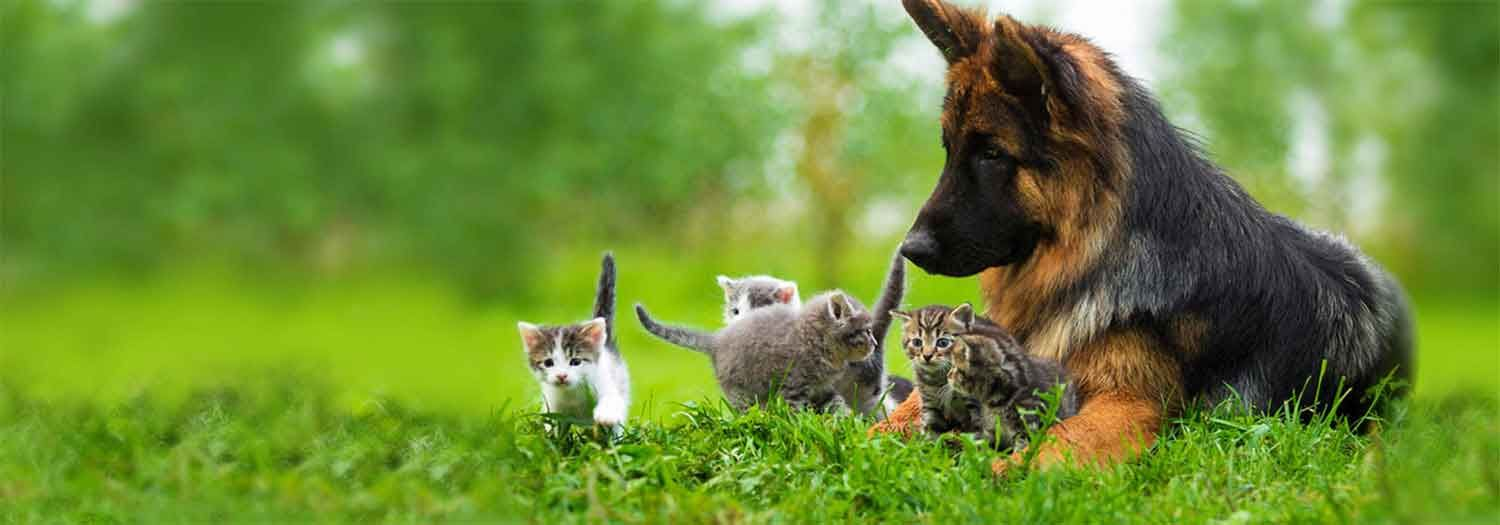 Home A2zali Kittens And Puppies Dog Cat Pictures Puppies And Kitties