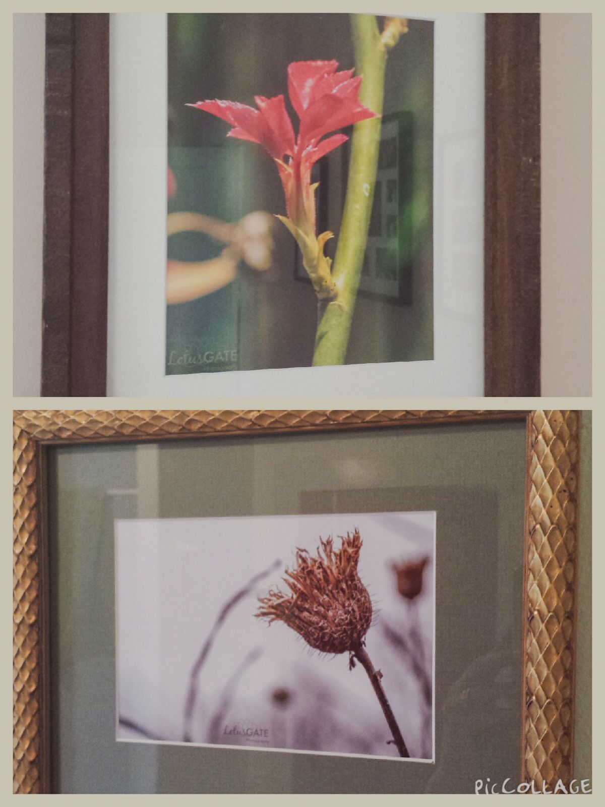Perfect frames for Lotus Gate Photography nature prints! | Cool Ways ...