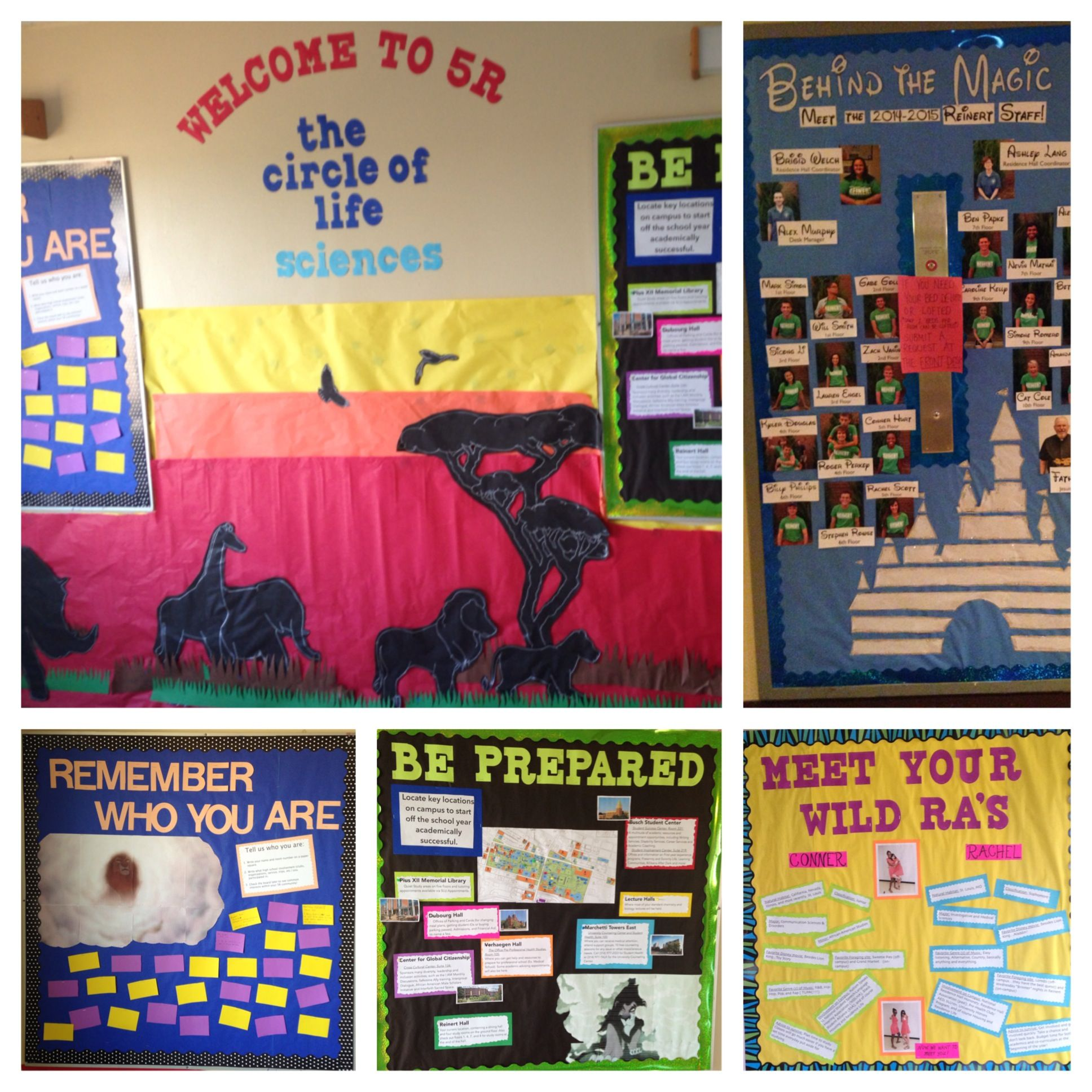 Disney S Lion King Themed Bulletin Boards And Wall Decs