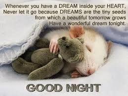 75 Hilarious Good Night Memes Images Pics Cute Good Night Quotes Good Night Meme Good Night Image