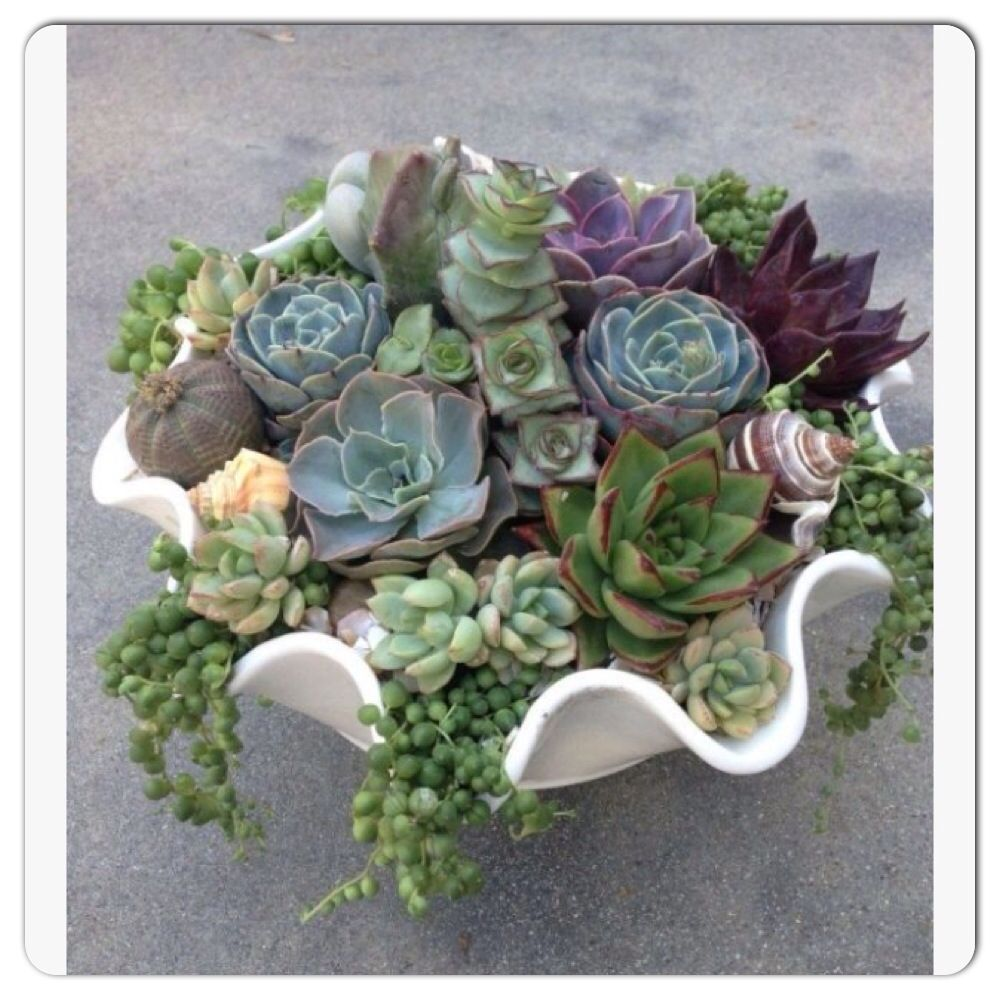 Dish garden succulents pinterest dish garden for Succulent dish garden designs