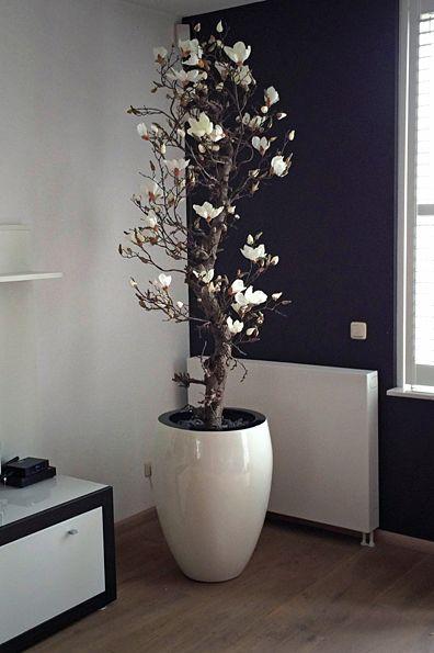 kunst bloesem boom bloesembomen magnolia boom magnoliabomen bart en blooms