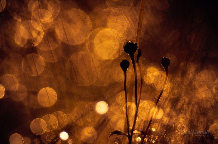 Autumn Colors by Joni Niemelä, via 500px