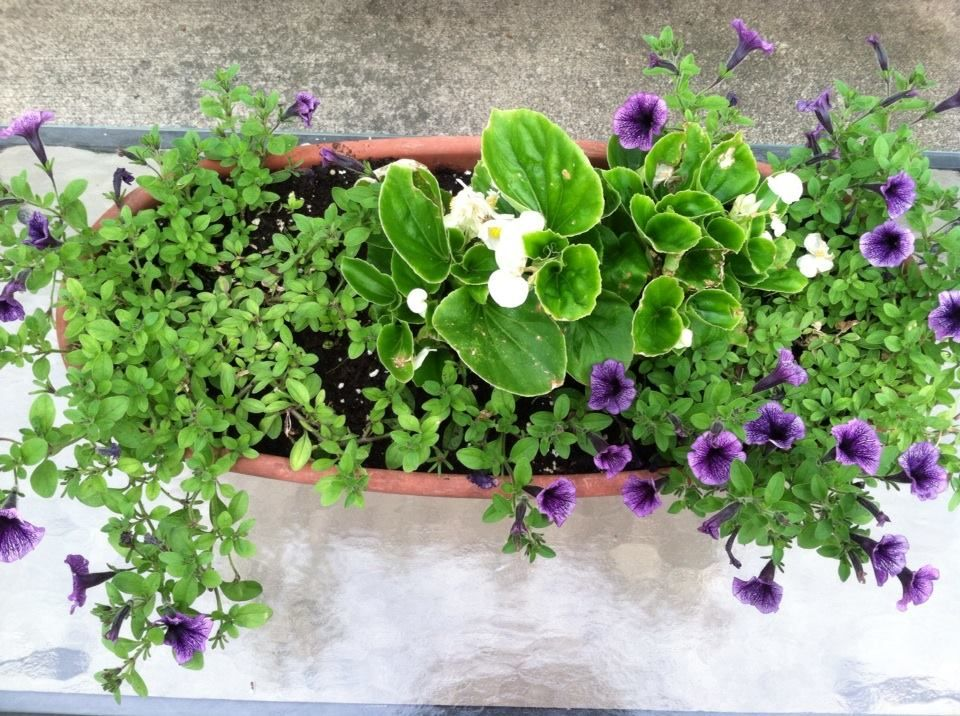 NEWLY ADDED PATIO PLANTING FOR 2014
