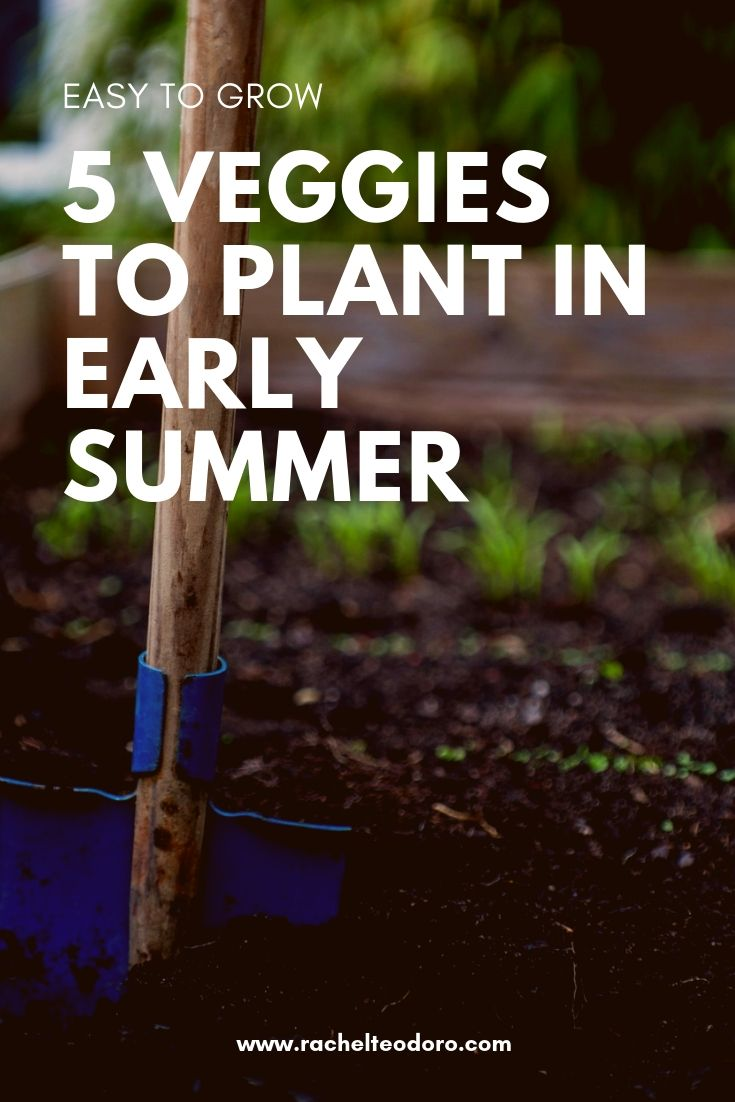 5 Easy To Grow Veggies To Plant In Early Summer Garden 400 x 300