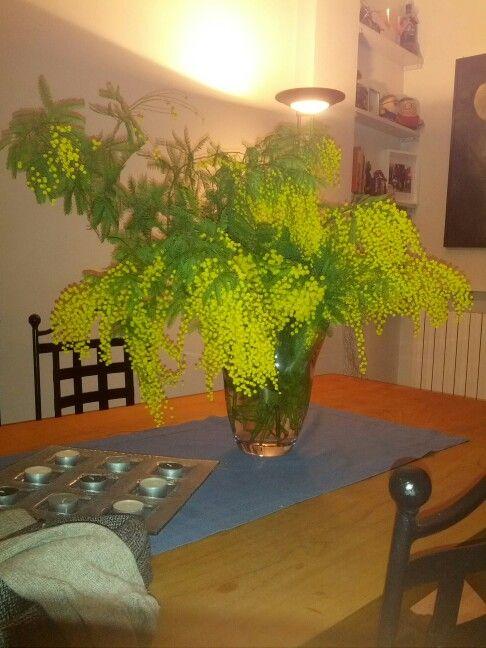 Mimosa  Wwwmanustyleit  Plants, Garden-7623