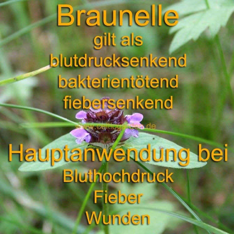 Kleine Braunelle ~ Ein natürliches Antibiotikum #kleinekräutergärten