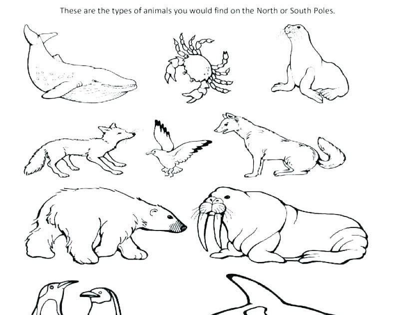 Arctic Animal Coloring Pages Free Hare Page Boxo Club Arctic Animals Coloring Pages Google Sok P Animal Coloring Pages Bear Coloring Pages Zoo Coloring Pages