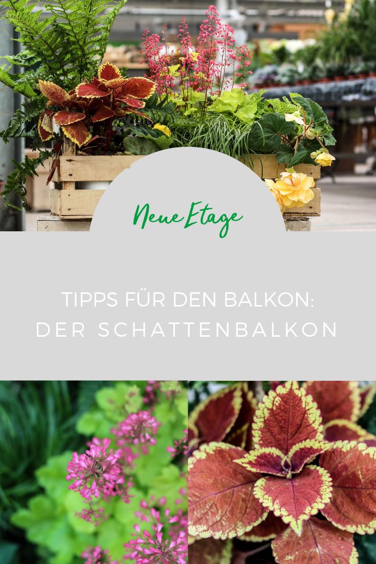 Blumen und Pflanzen für den Schattenbalkon | Tipps