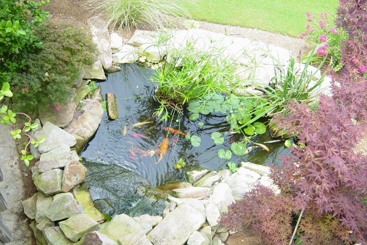 Koi Pond Design Ideas large backyard garden house design with koi ponds and waterfall plus Small Koi Pond Google Search