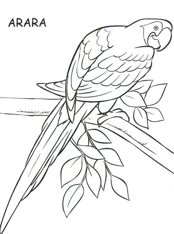Araras Desenho Pesquisa Google Desenho De Arara Passaro