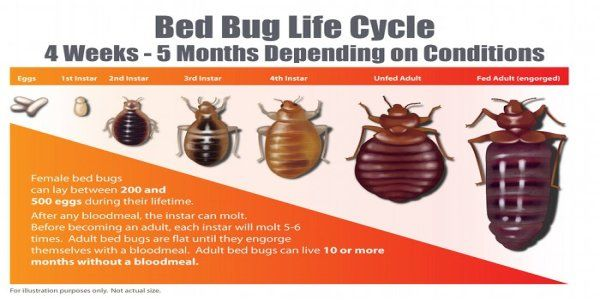 1 Bed Bug Heat Treatment Its All We Do All We Train For Bed Bugs Bed Bug Extermination Bed Bug Bites