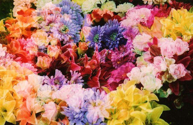 Flowers by daniel-jones, via Flickr
