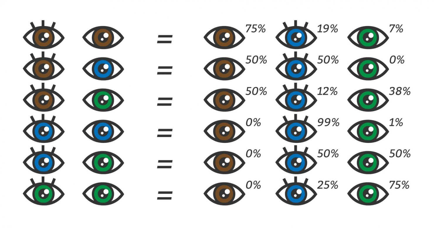 Eye Color Chart What Color Eyes Will My Baby Have Eye Color Chart Baby Eye Color Chart Eye Color Change