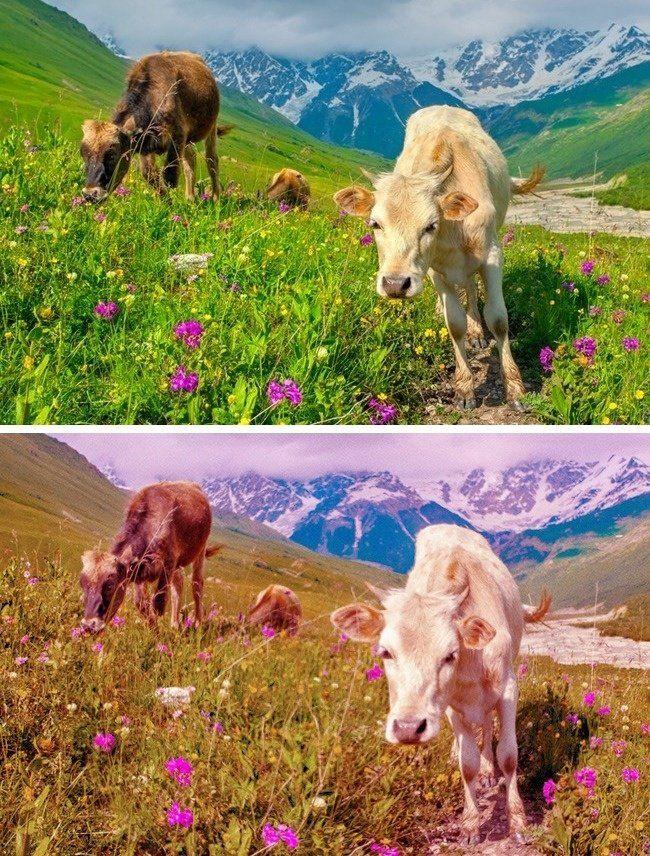Así se ve el mundo a través de los ojos de diferentes animales