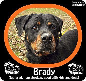 Standish Mi Rottweiler Meet Brady A Dog For Adoption Kitten