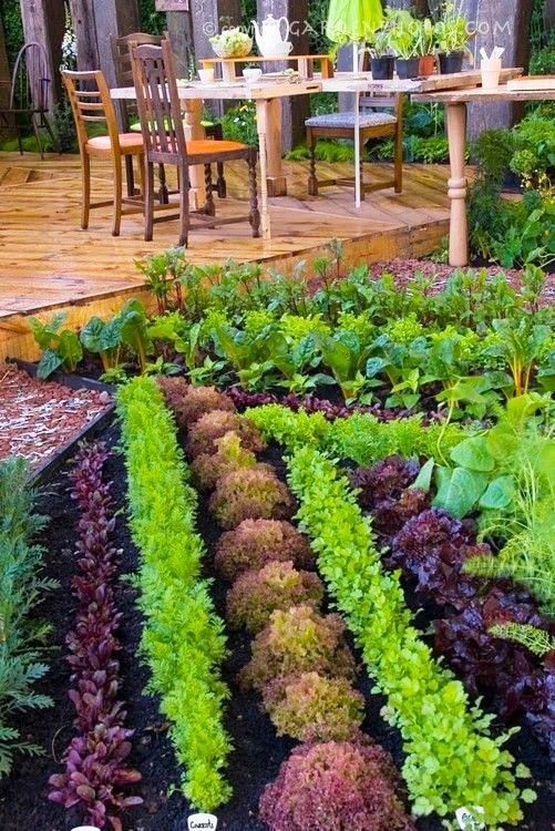297c9d00081f617282676a228462af9c - What Are The Basic Gardening Techniques