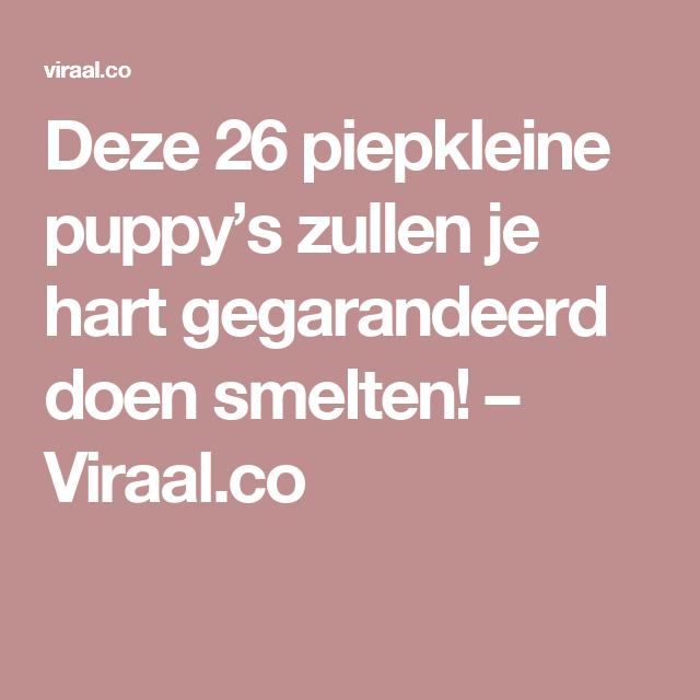 Deze 26 piepkleine puppy's zullen je hart gegarandeerd doen smelten! – Viraal.co