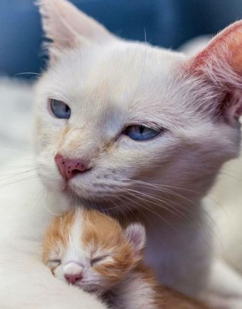 Süß! Katzenmama u. Baby (mit Bildern) Baby katzen