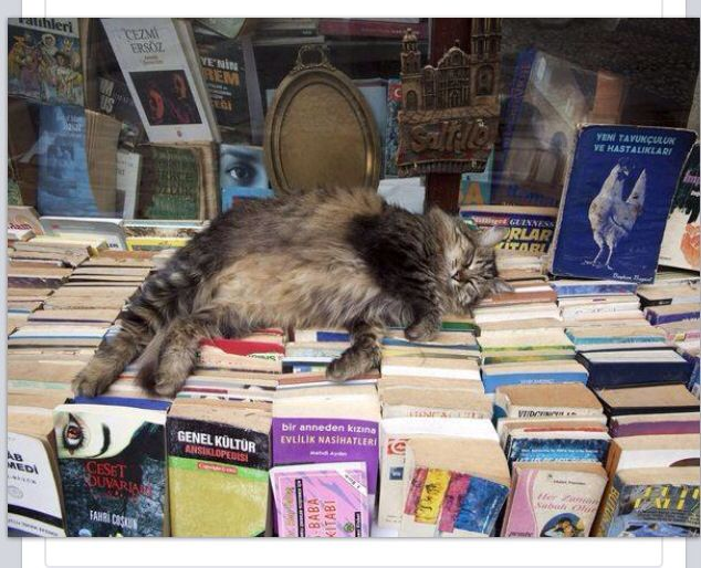 Books ~ Cats | Taking a well-earned break