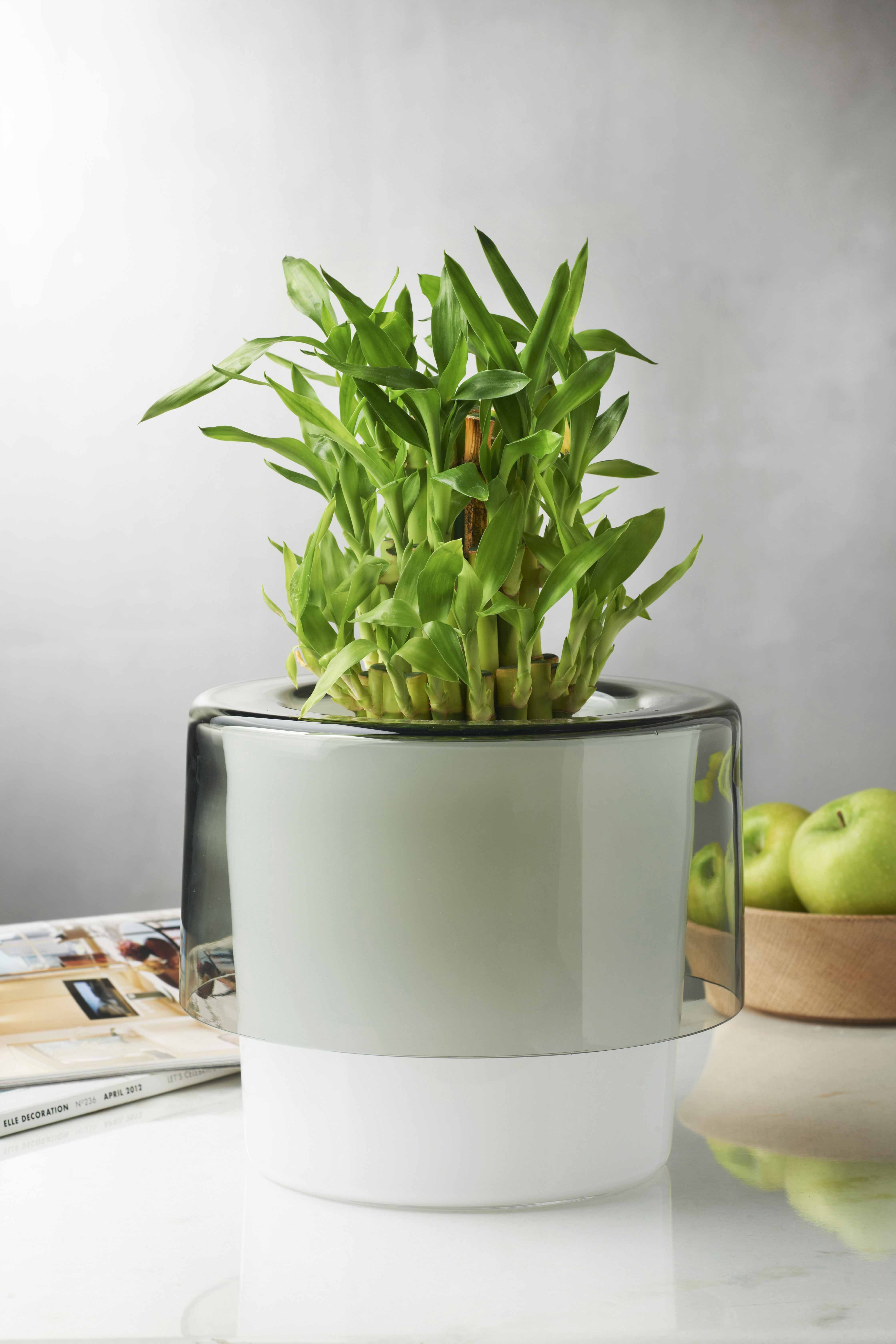 Roots orchid pot opal white and smoke nude flower home