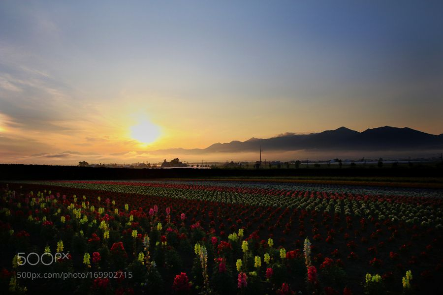 Morning field of flowers by YoshihiroKouno. @go4fotos