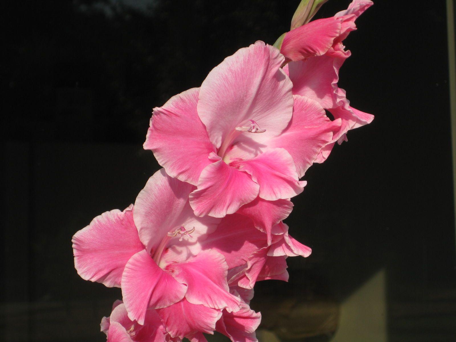 Peach bloom by sarah stephenson spring time pinterest spring time