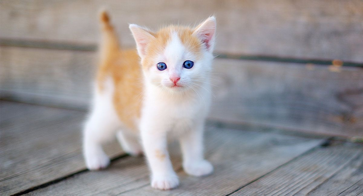 When Do Cats Stop Growing A Complete Kitten Growth Guide Baby Cats Kittens Cutest Cat Ages