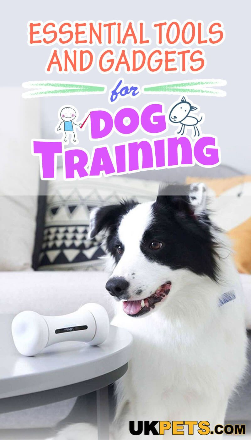 What Tools And Gadgets To Use In Dog Training Top Articles On