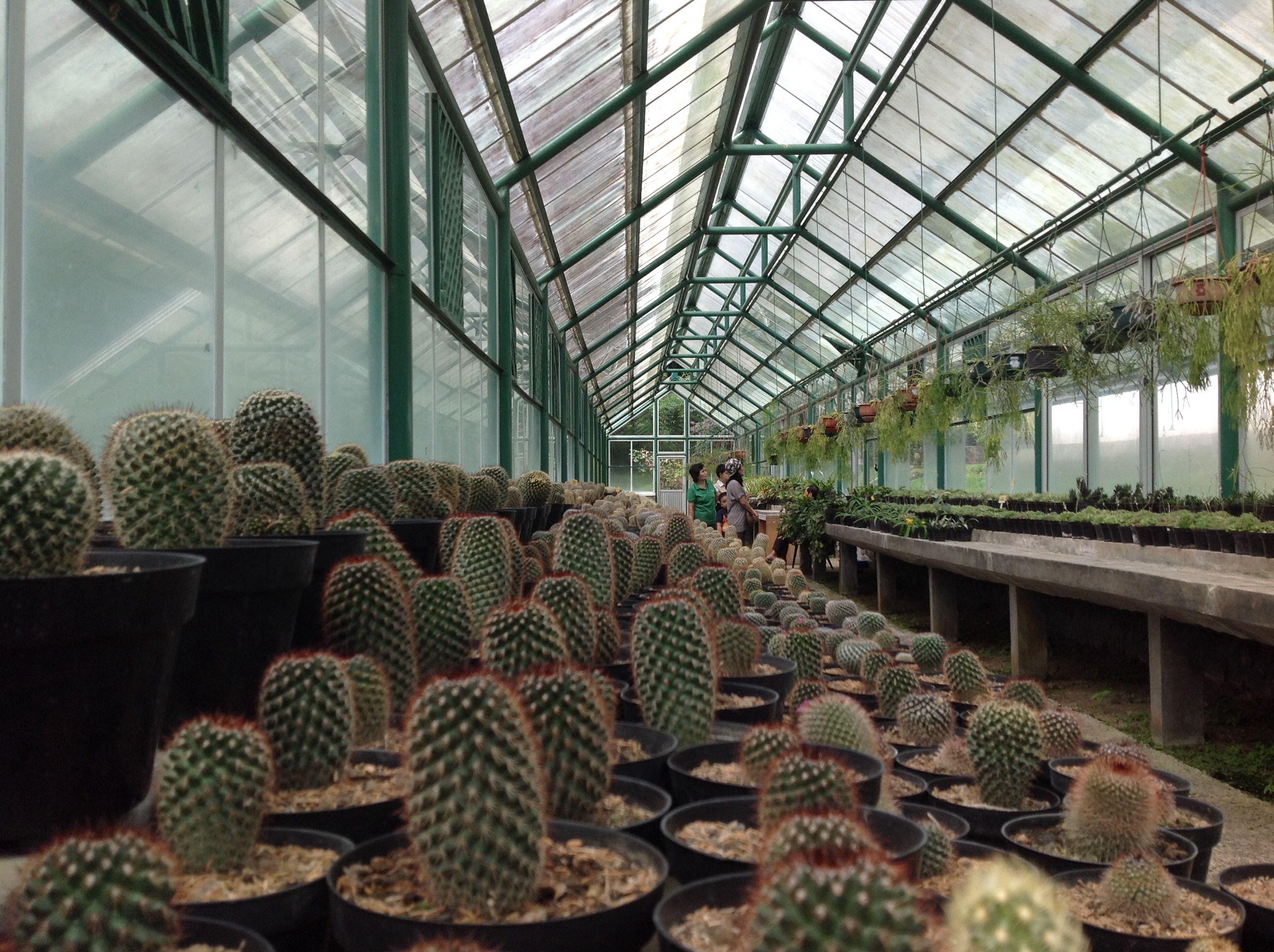 Green house. Cactus cibodas botanical garden, Indonesia