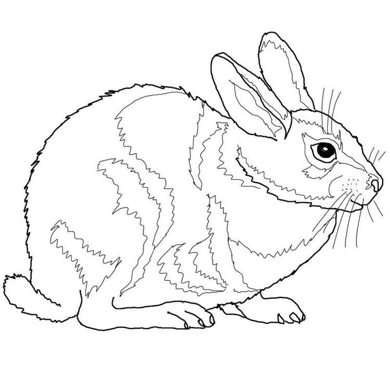 Awesome Easter Bunny Coloring Pages To Welcome The Easter Day 33 Bunny Coloring Pages Easter Bunny Colouring Dog Coloring Page