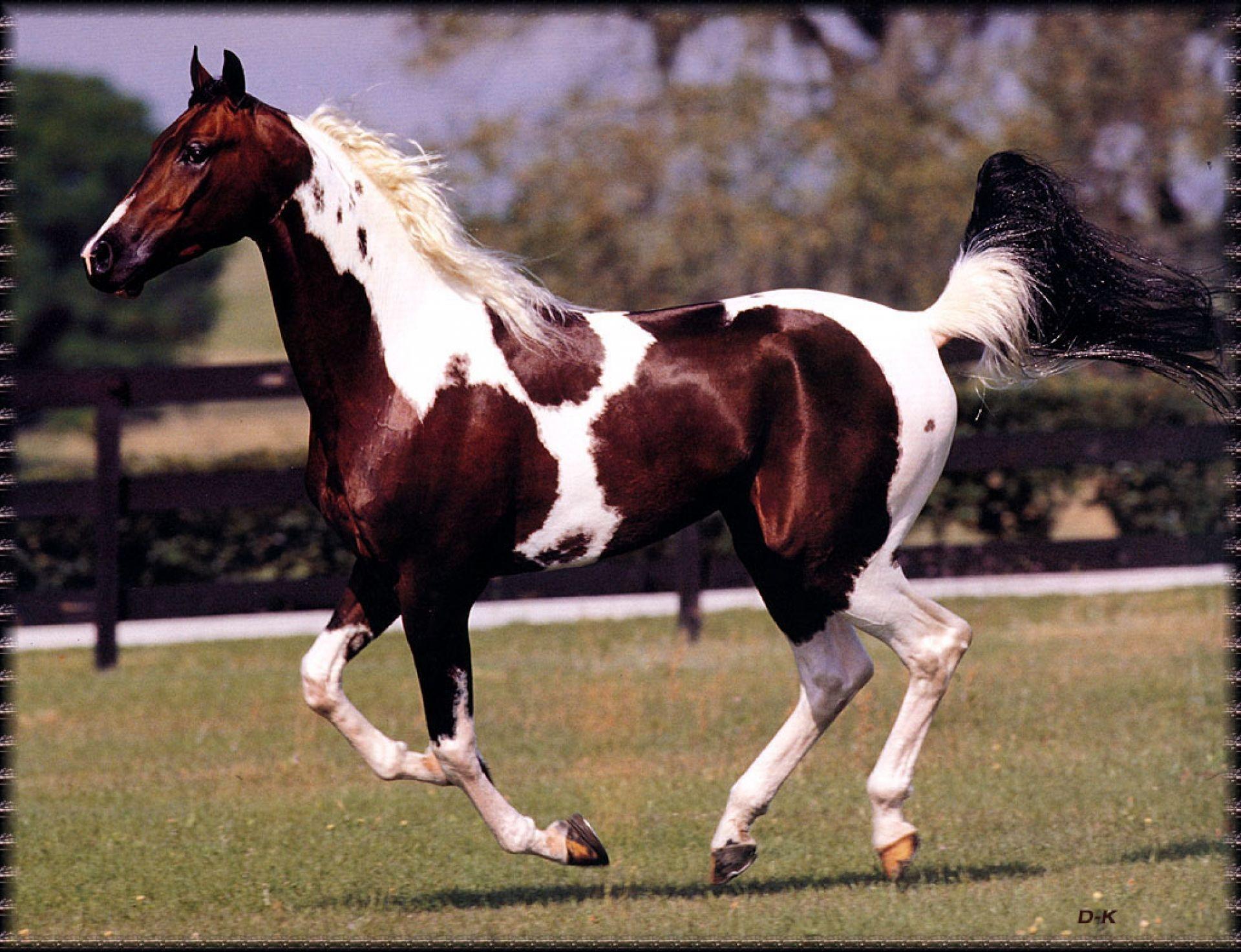 Free Horses In Arizona 170 Horse Wallpaper National Show Horse