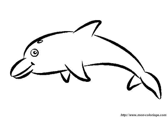 malvorlage delfin einfach  tiffanylovesbooks