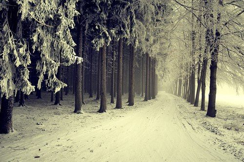 Wintery Path...   I wanna walk this.