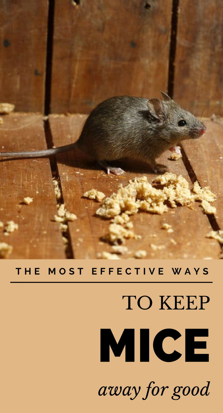 The Most Effective Ways To Keep Mice Away For Good With Images Keep Mice Away Getting Rid Of Mice Mice Repellent