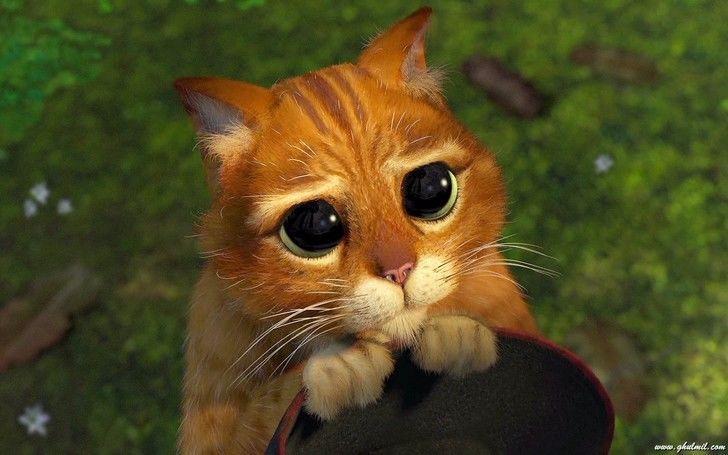 Chat pott animaux chat pott chat bott shrek et chat - Dessin chat botte ...
