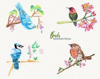 Artikel ähnlich wie Aquarell Vögel Clipart | Winter Vögel Clipart – Waldtiere – Robin, Kardinal Singvögel – Scrapbooking Natur Kunst – Digital Instant D auf Etsy   – Kuş illüstrasyon